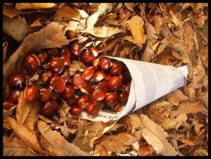 Castañas en otoño
