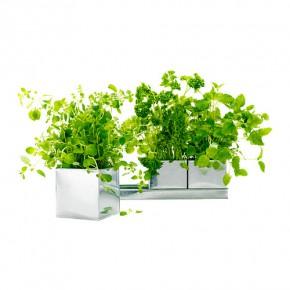 Hierbas aromáticas Ikea