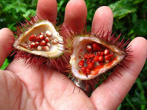 Fruto del achiote